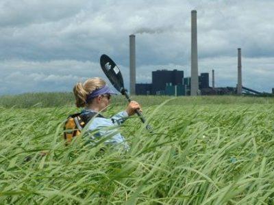 paddling grass photo