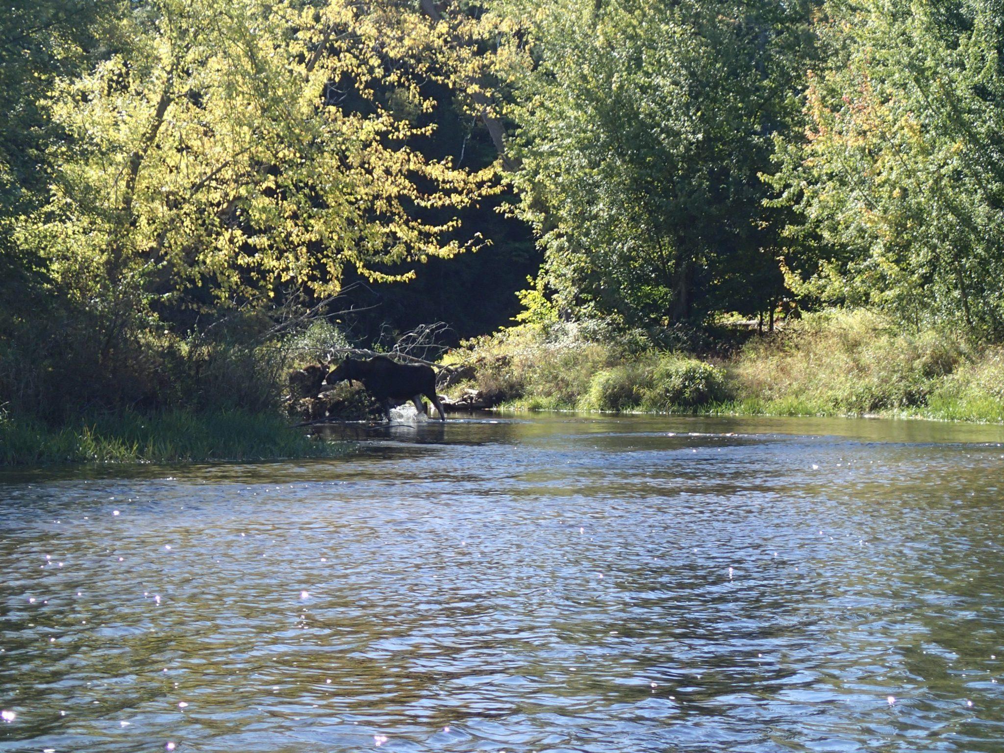 River Health Analysis